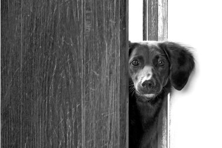 איך מונעים מהכלב שלנו לפתוח את דלת הבית